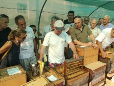 Gruppo di apicoltori che guarda senza maschera un alveare di ligustica